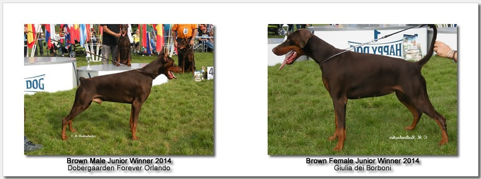 brown_junior_2014